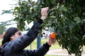 ¿Se pueden comer los frutos de los árboles de la ciudad?